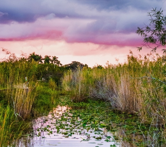 Most Popular Plants In The Everglades Facts Picture