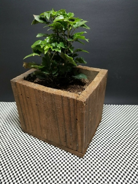 Most Popular Rustic Planter Box Picture