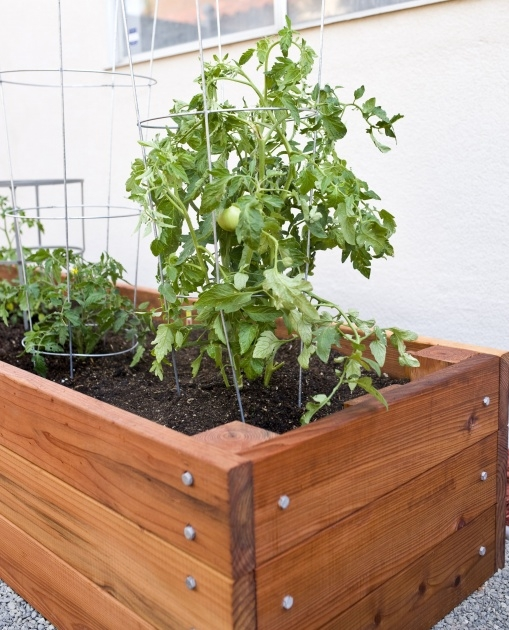 Most Popular Tomato Planter Box Photo