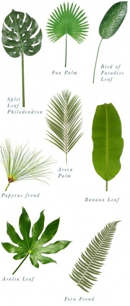 Most Popular Tropical Types Of Plants Picture