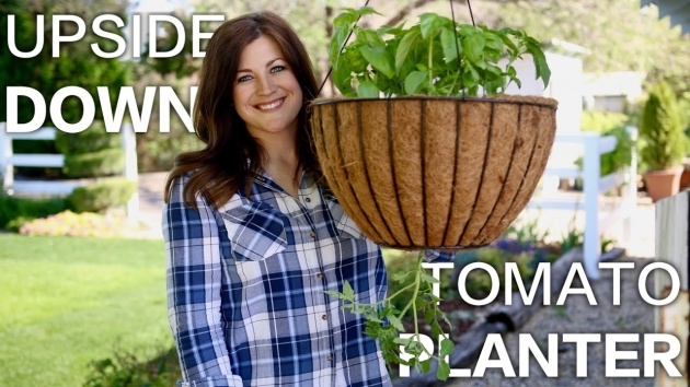 Most Popular Upside Down Tomato Planter Diy Photo
