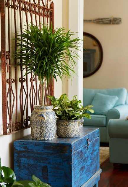Outstanding Fantastic House Plants Image
