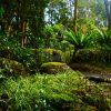 Forestfloor Rainforest Animals And Plants Photos