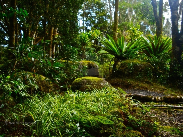 Outstanding Forestfloor Rainforest Animals And Plants Photos Picture