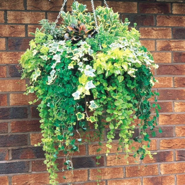 Outstanding Hanging Basket Foiliage Picture