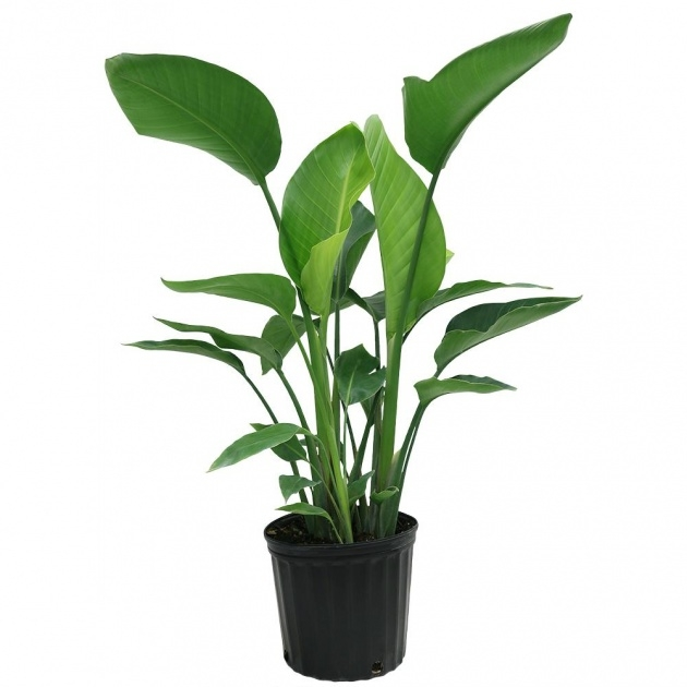 Outstanding Home Depot Plants Photo