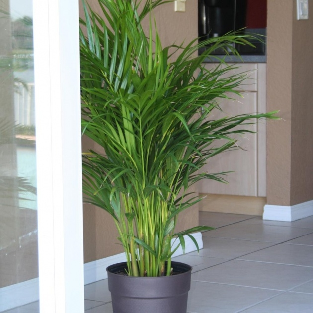 Outstanding Houseplants That Cool Air Photo