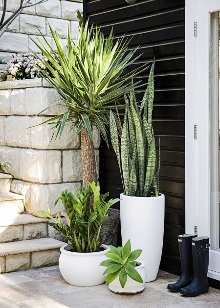 Outstanding Large Exterior Pot Plants Image