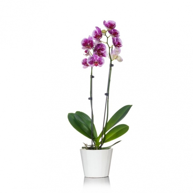 Outstanding Orchid Plant Pot Image