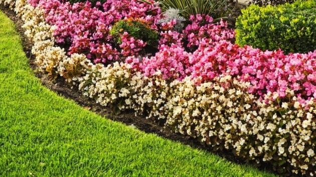 Outstanding Plant Border Ideas Photo