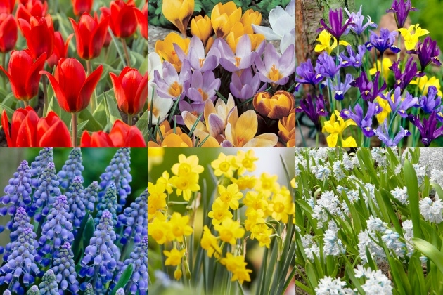 Outstanding Planting Flower Bulbs Photo