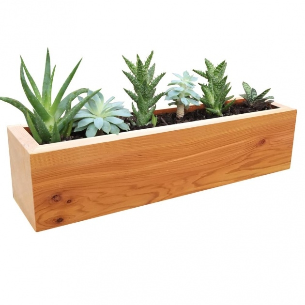 Outstanding Succulent Planter Box Picture