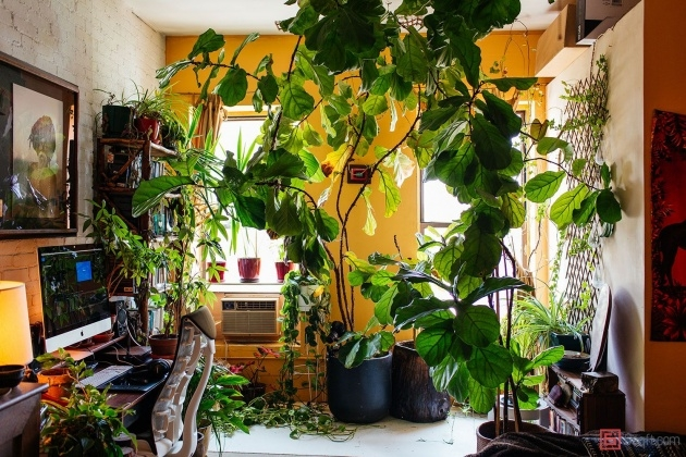 Outstanding Summer Rayne Oakes Houseplants Picture