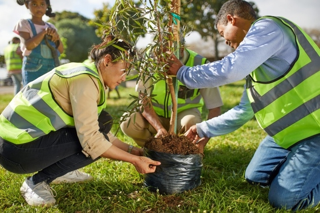 Outstanding Tree Planting Photo