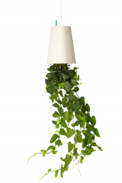 Outstanding Upside Down Hanging Plants Picture