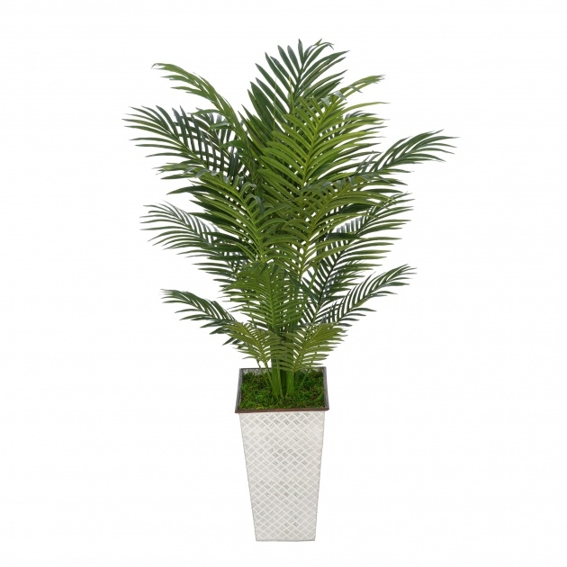 Perfect Artificial Indoor Plants Naples Florida Picture
