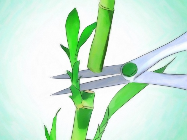 Perfect Bamboo Plant Growth Photo
