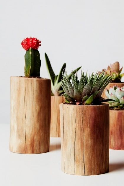Perfect Cactus Plant Pot Picture