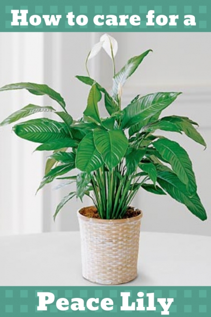 Perfect Common House Plants Image