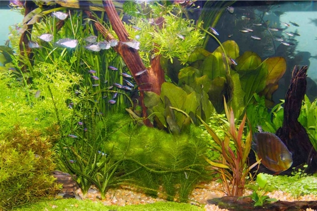 Perfect Growing Aquarium Plants Photo