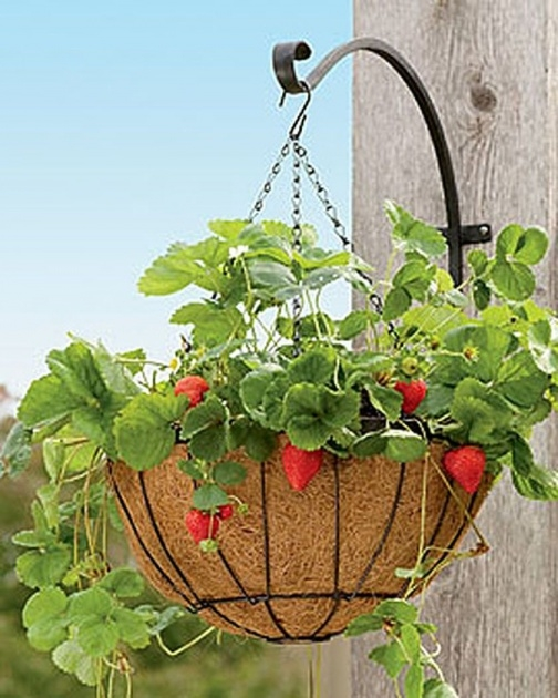 Perfect Hanging Strawberry Planter Image