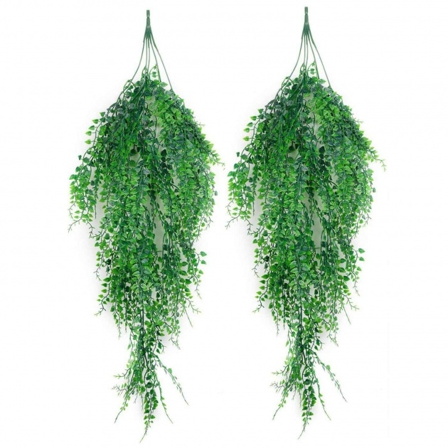 Perfect Hanging Vine Plants Photo