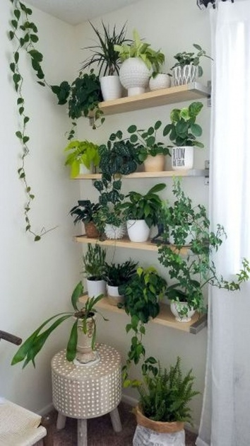 Perfect Indoor Plants Decor Ideas Picture