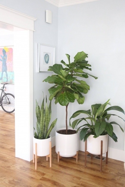 Perfect Indoor Pot To Beutify House Photo