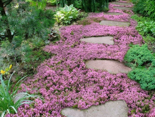 Perfect Low Ground Cover Plants Picture