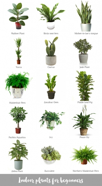 Perfect Low Light Indoor Plants Photo
