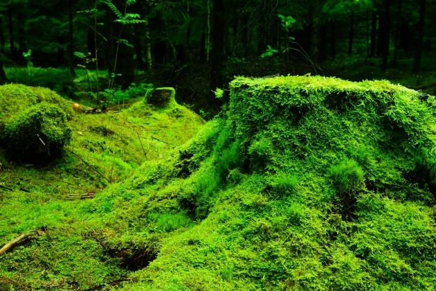 Perfect Moss Plant Picture