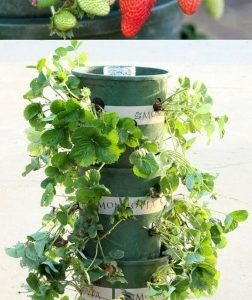 Strawberry Tower Planter