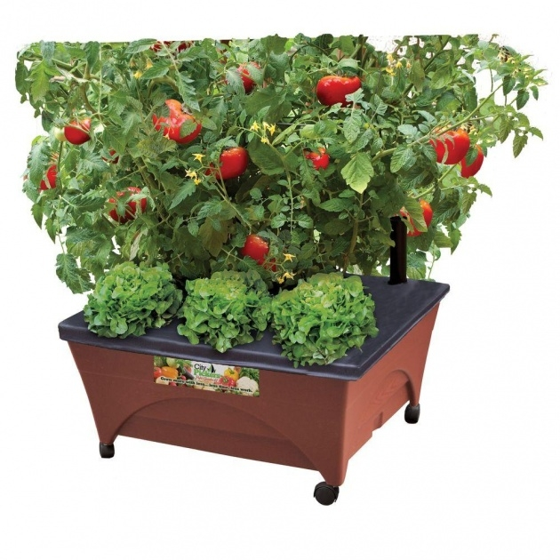 Perfect Tomato Planter Box Picture