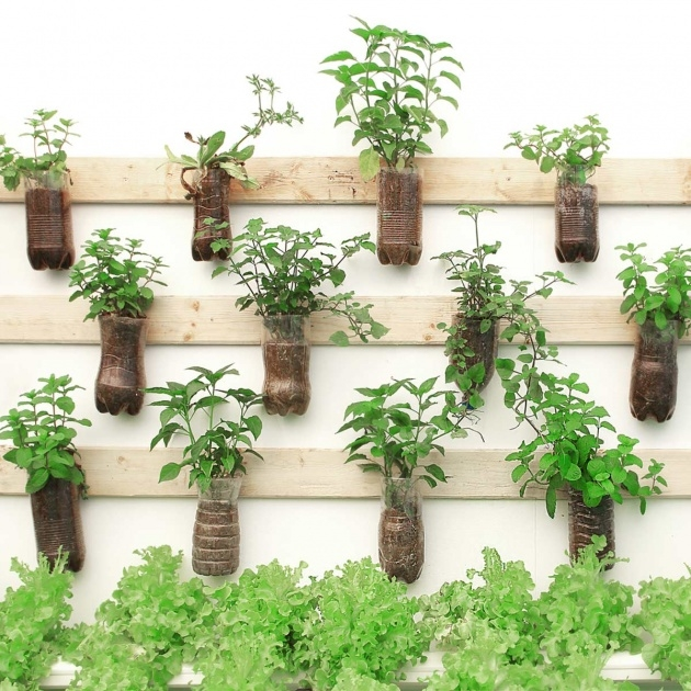 Perfect Wall Plant Hangers Outdoor Image