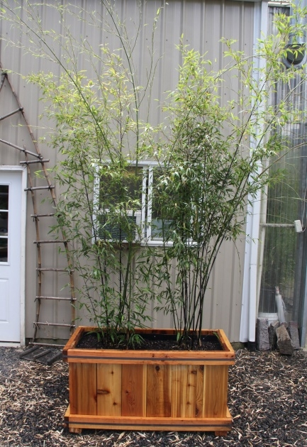 Popular Bamboo Planter Ideas Photo