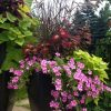 Container Gardens For Full Sun