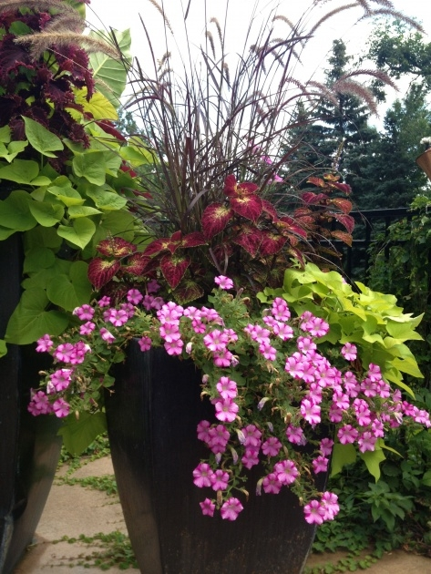 Popular Container Gardens For Full Sun Image