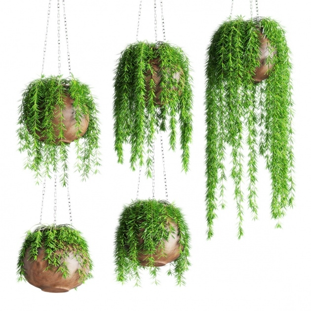 Popular Hanging Plant Pots Picture