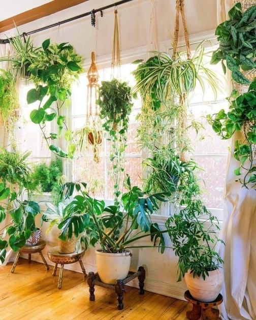 Popular Hanging Plants Ideas Image