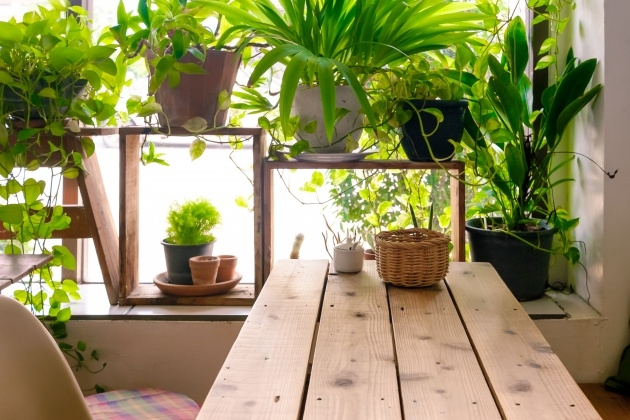 Popular Indoor Plants And Pots Photo