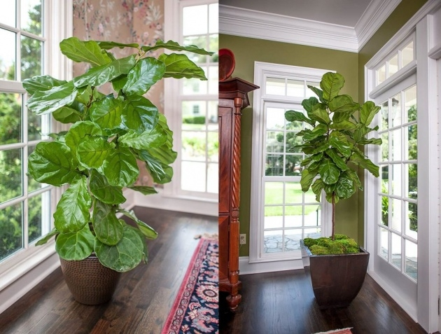 Popular Indoor Pot To Beutify House Picture
