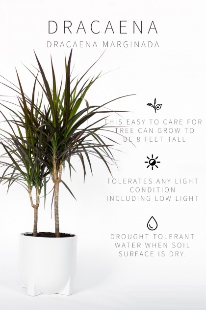 Popular Low Light Indoor Plants Picture