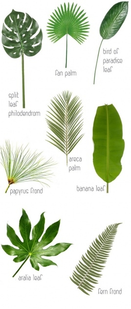 Popular Name Of Tropical Plants With Pictures Image