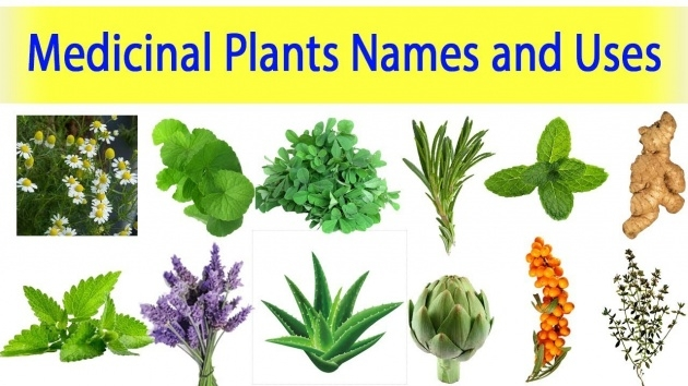 Popular Picture Of Plant With Name Image
