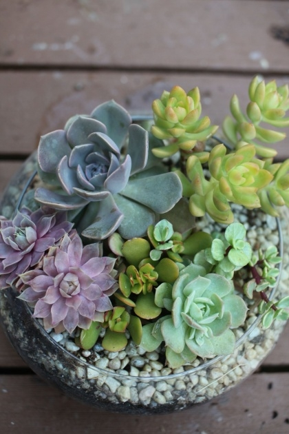 Popular Plants In Glass Bowl Photo