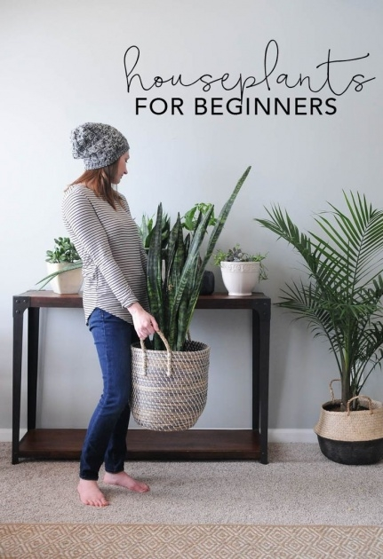 Popular Plants In Home Decor Picture