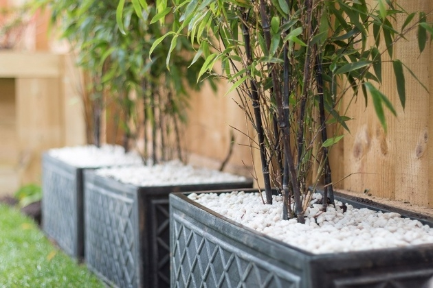 Remarkable Bamboo Planter Box Image