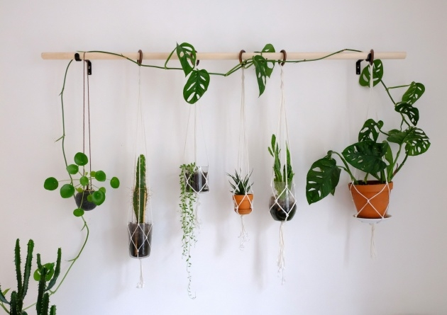 Remarkable Diy Indoor Plant Wall Picture