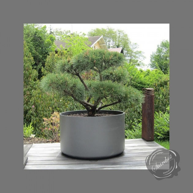 Remarkable Extra Large Plant Pots Picture