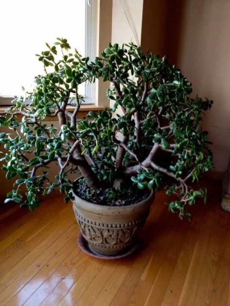 Remarkable Fast Growing House Plants Image